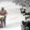 A man snowblows a long, rural drive.