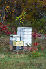 Bee Hives in Autumn, Green County, Wisconsin