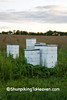 Bee Hives at Dawn, Rock County, Wisconsin
