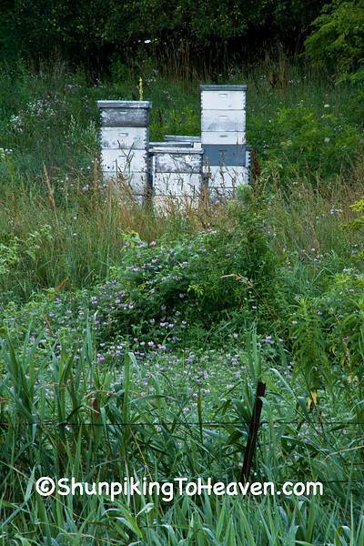 Summer Bee Hives, Sauk County, Wisconsin