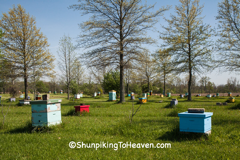 Bee Hives at Mike's Bees and Honey, Hancock County, Ohio