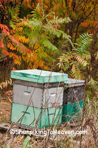 Beehives and Sumac, Sauk County, Wisconsin