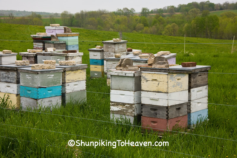 Bee Hives, Richland County, Wisconsin