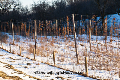 Winter Hop Yard, Dane County, Wisconsin