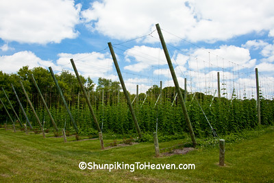 Hop Yard at New Glarus Brewery, Green County, Wisconsin