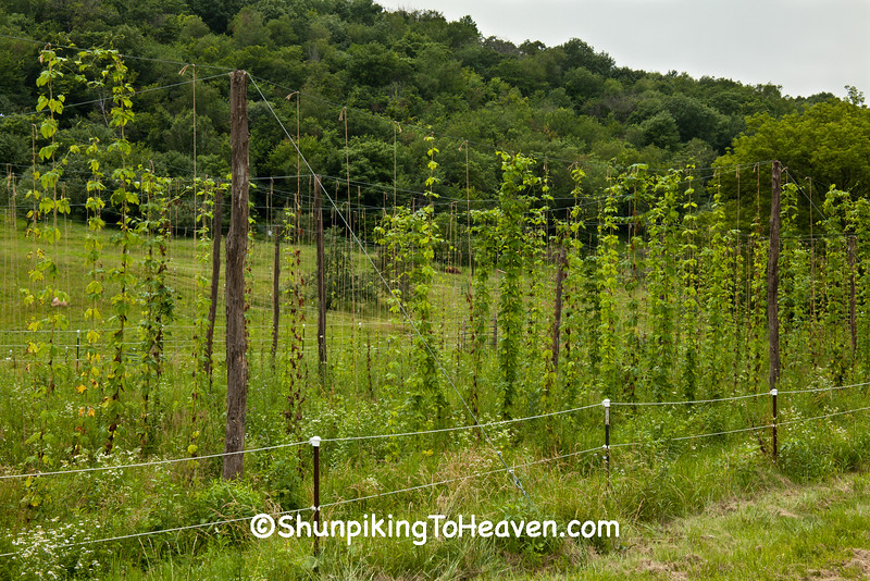 Hops, Dane County, Wisconsin