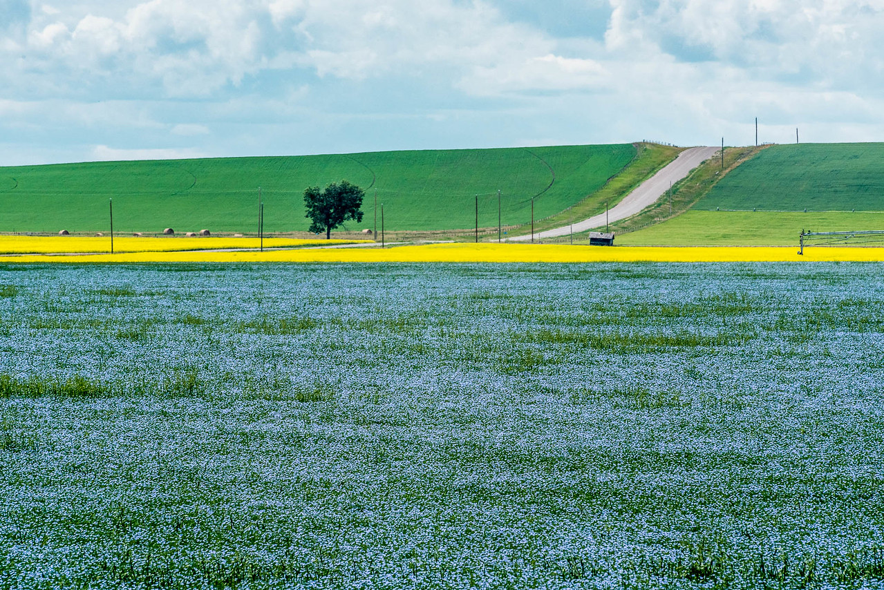 AGscape - Blue, green and yellow