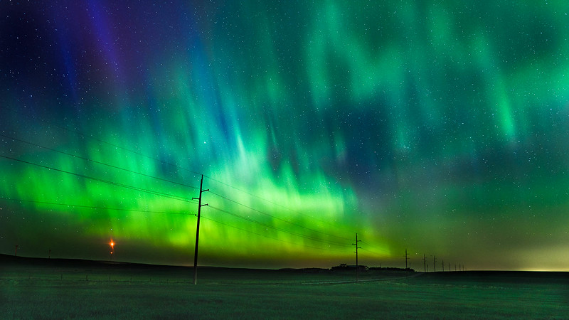 Aurora Blessing - Winter Wheat