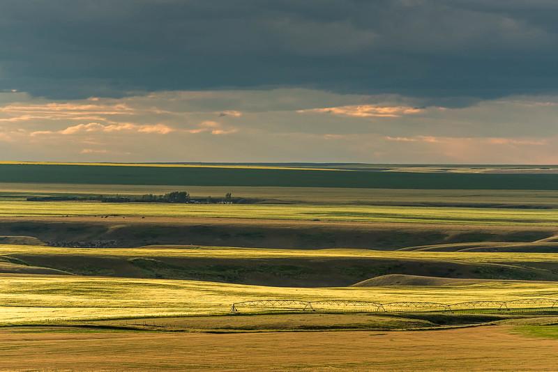 AGscape - Barley near Magrath