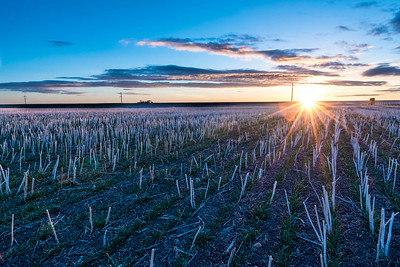 Winter Wheat Sunrise