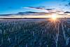 Winter Wheat Sunrise
