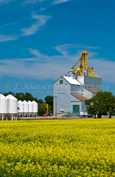 Grain elevator and canola field at Glenboro, Manitoba, Canada