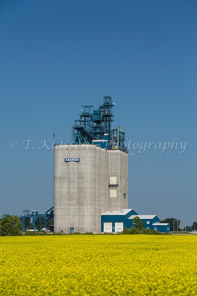 The Viterra Agassiz inland grain terminal with a canola field near Morden-Winkler, Manitoba, Canada.