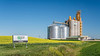 A G3 Canada inland grain handling facility with a blooming yellow canola field near Glenlea, Manitoba, Canada.