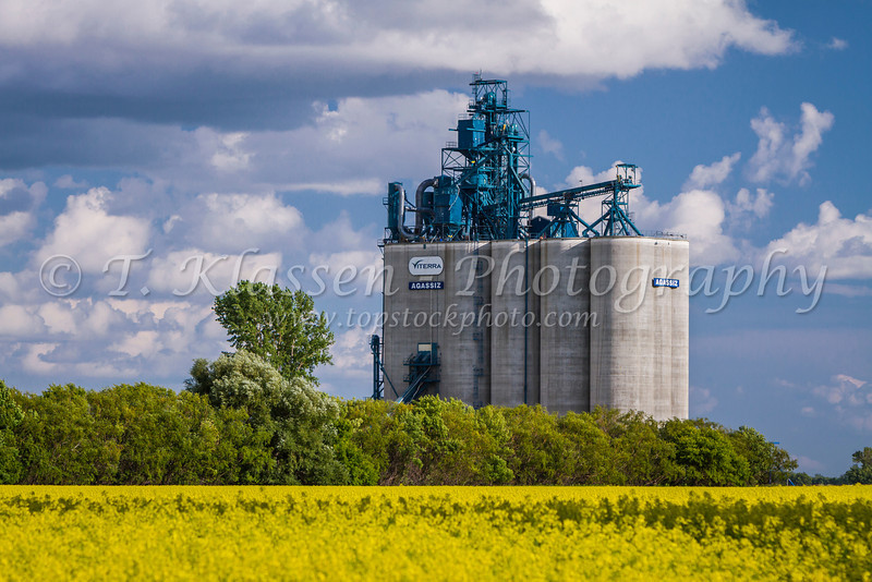 The Viterra Agassiz inland grain terminal with a yellow blooming canola field at Winkler/Morden, Manitoba, Canada.