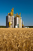 Agricore elevator and ripe wheat field at Starbuck, Manitoba, Canada.