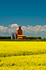 APioneer grain elevator with blooming canola field at Carey, Manitoba, Canada.