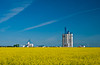 Agricore grain storage elevator with yellow canola field at Fannystelle, Manitoba