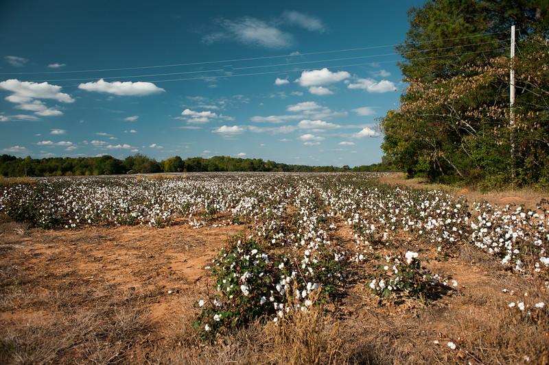 Walton County (GA) October 2016