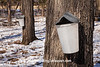 Maple Sap Collecting, Columbia County, Wisconsin