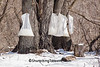 Maple Sap Bags, Marquette County, Wisconsin