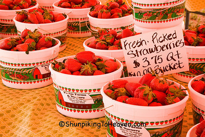 Fresh-Picked Strawberries from Porter Farms, Wake County, North Carolina