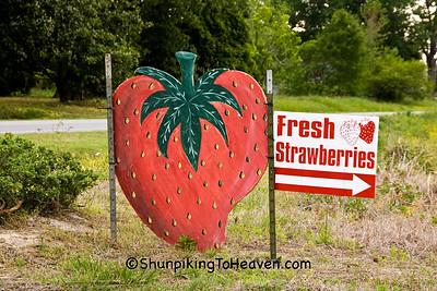 Sign for Fresh Strawberries, Pitt County, North Carolina