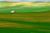 Rolling hills of wheat in the Palouse region of Washington in the spring