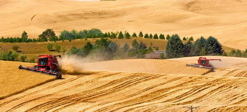 A pair of combines harvest grain on the hills of the Palouse region of Washington