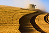 A combine harvests grain on the hills of the Palouse region of Washington late in the afternoon