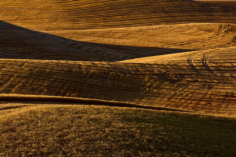 Mature wheat on the hills of the Palouse region of Washington at sunset