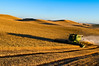 A combine casts a long shadow harvesting grain on the hills of the Palouse region of Washington late in the afternoon