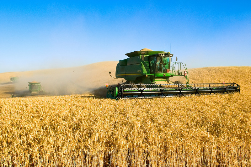 A team of combines harvesting wheat on the hills of the Palouse region of Washington