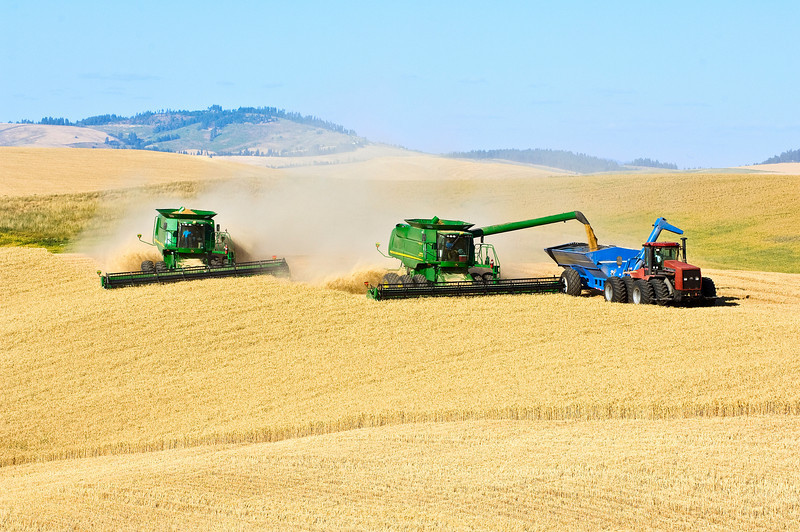 A team of combines harvest wheat in the Palouse region of Washington while one unloads into a grain cart on the go