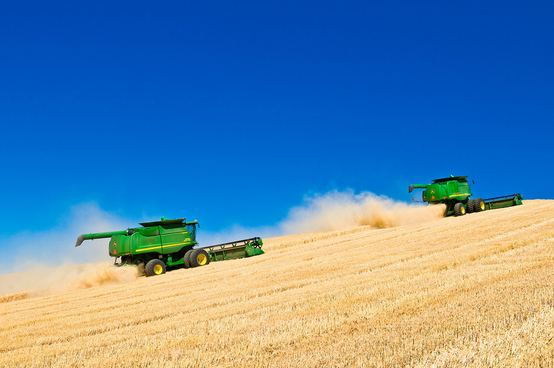 A pair of combines harvest wheat in the Palouse region of Washington