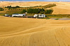 Mature wheat ready for harvest adjacent to a farm shop in the Palouse region of Washington