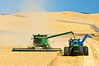 A combine harvests wheat in the Palouse region of Washington while one unloading into a grain cart on the go