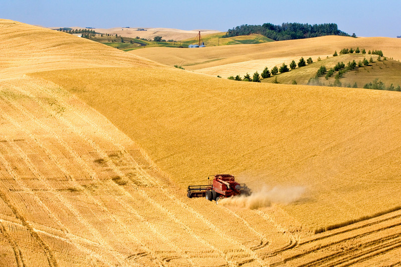 A combine harvests grain on the hills of the Palouse region of Washington