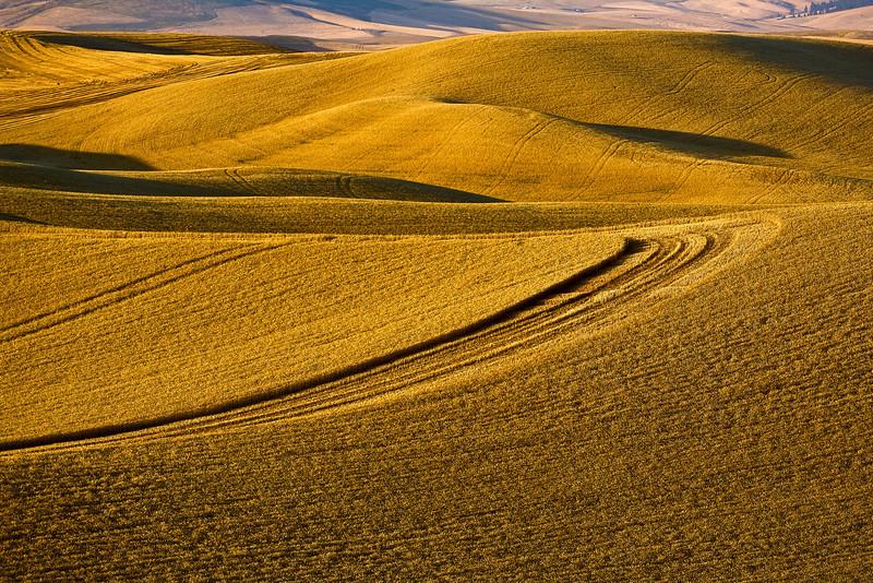 Hills of the Palouse region of Washington