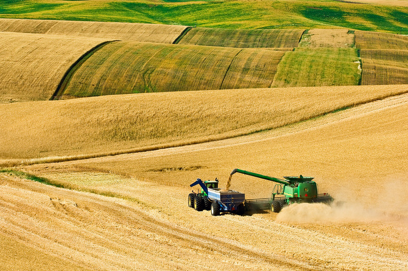 A combine harvests wheat while unloading on the go in the hills of the Palouse region of Washington