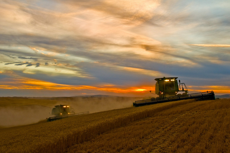 A pair of combines harvest wheat at sunset in the Palouse region of Washington