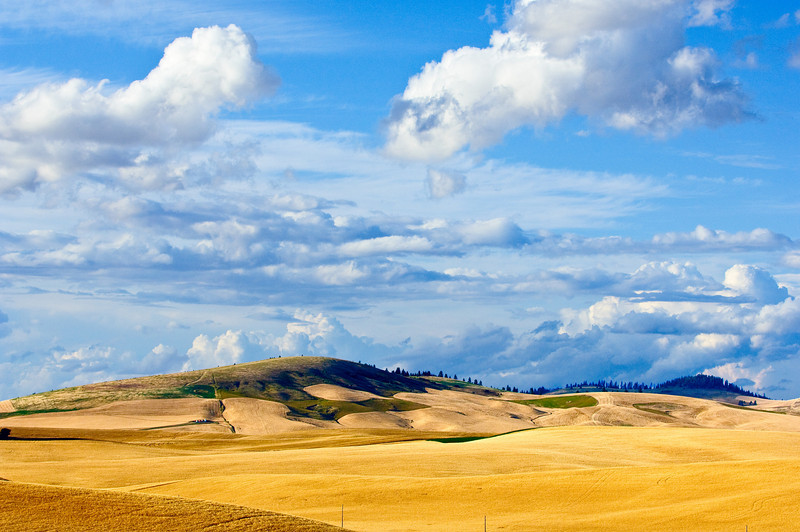 Clouds over mature fields of grain and peas in the Palouse region of Washington