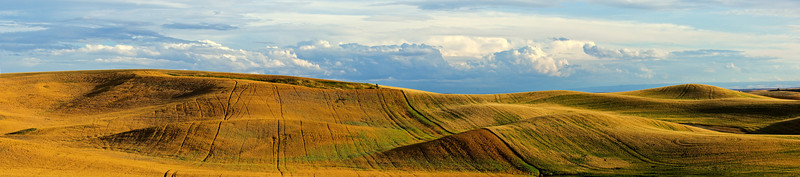 Hills of various crops in the Palouse region of Washington covered by storm clouds
