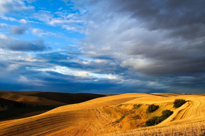 Sunlight illuminates a freshly harvested wheat field in the Palouse region of Washington