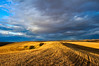 Sunlight illuminates a freshly harvested wheat field in the Palouse region of Washington