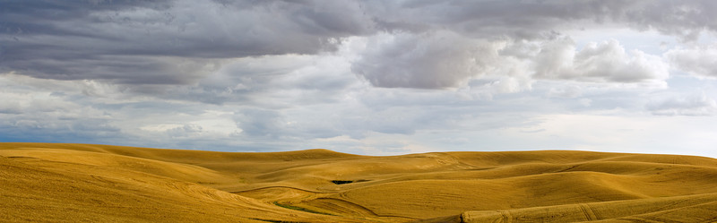 Hills of wheat in the Palouse region of Washington covered by storm clouds