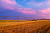 Sunset over an an irrigated wheat field in Eastern Washington