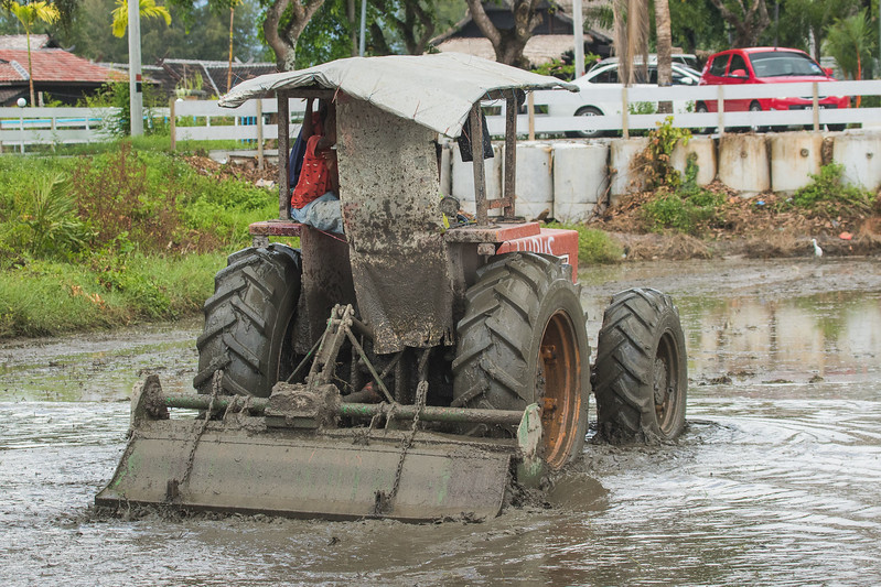 Fiat plowing a rice paddy in Langkawi, MY.