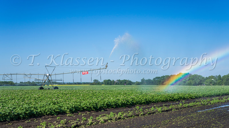 Irrigation and rainbow on a potato field near Winkler, Manitoba, Canada.