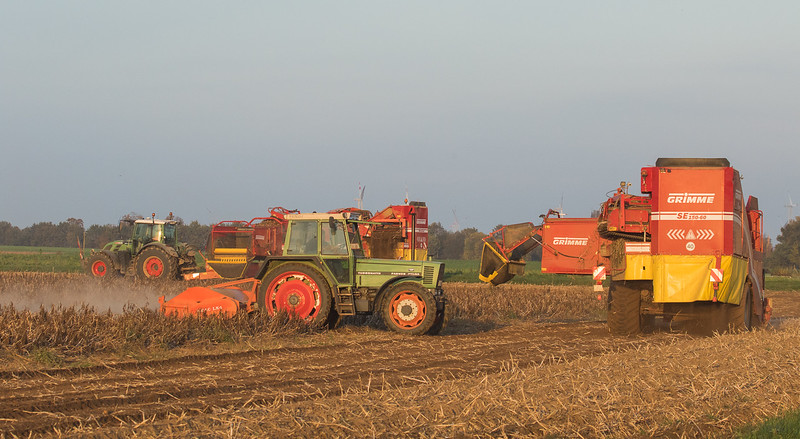 Fendt 718 Vario and 720 Variowith potato harvesters Grimme SE150-60 and Fendt Farmer 311 LSA with haulm topper Amac LK4 in Titz.